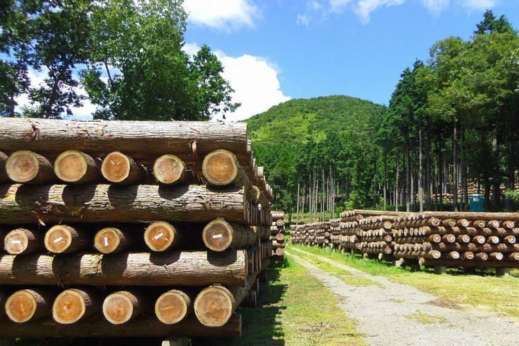 森林体験ツアー@大分県日田市上津江