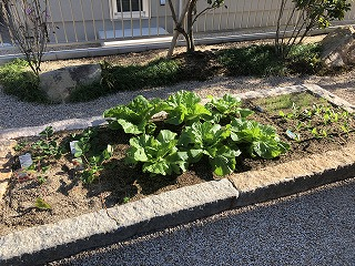 【下関】野菜づくり