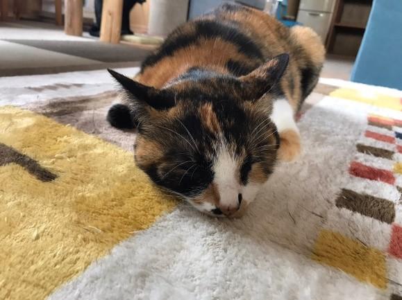 【周南】念願だった猫カフェへ